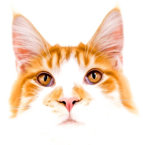 Feline Divine mobile cat grooming - Flash - homepage