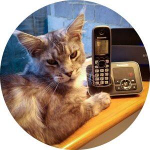 Contact me - Feline Divine Mobile Cat Grooming